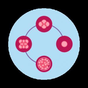 Step 5: Embryo Culture
