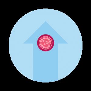 Step 6: Embryo Transfer