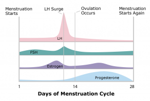 Mensturation Graph